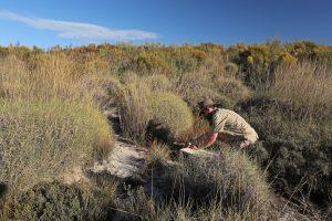 Mallee Emu-wren release Monarto Zoo