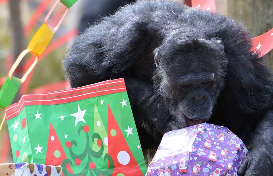 Merry Christmas from Monarto Zoo
