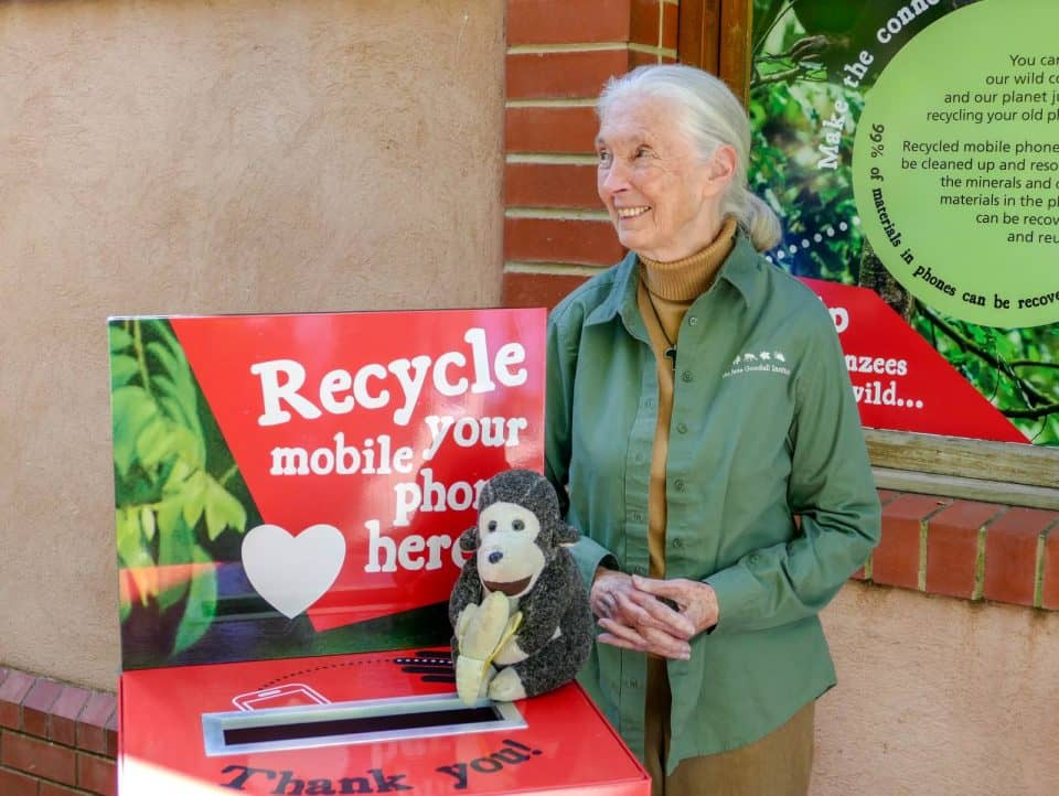 Jane Goodall Monarto Zoo