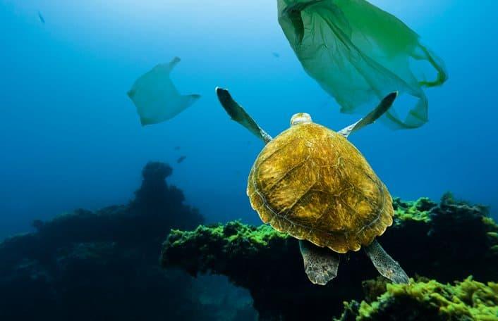 Plastic Monarto Zoo