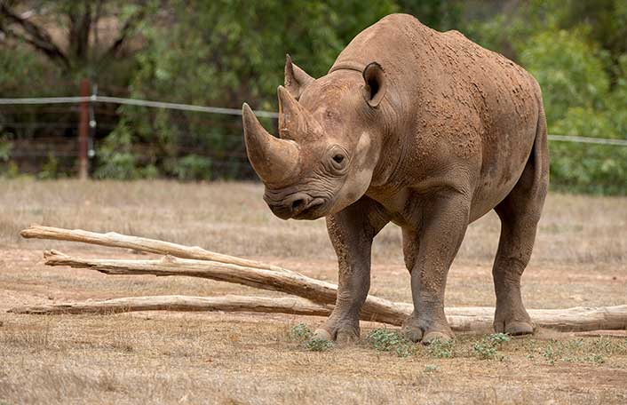 Animal Ancestors